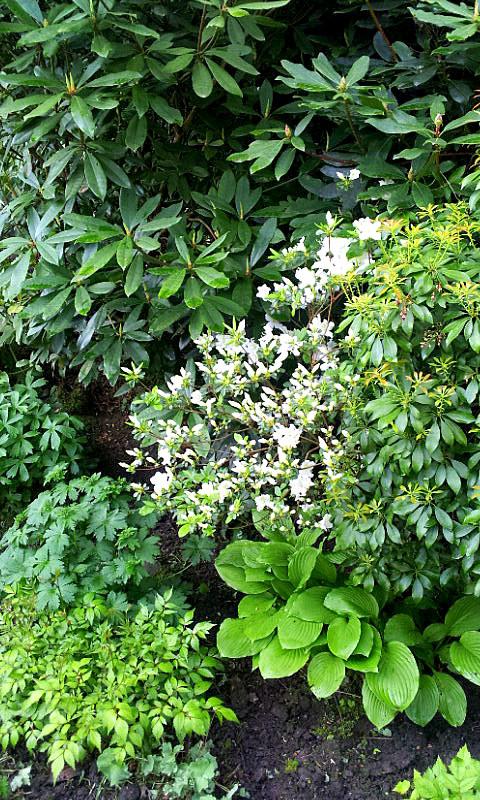 26.04.14 garden wpt 4