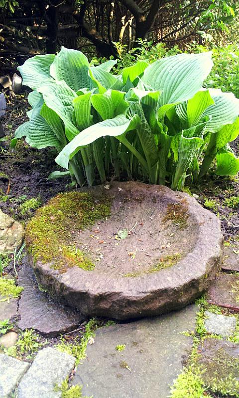 26.04.14 garden wpt 5