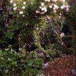 Off.Garten 095 BLOG